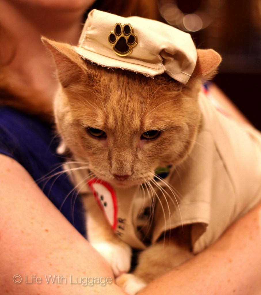 algonquin hotel cat fashion show 1