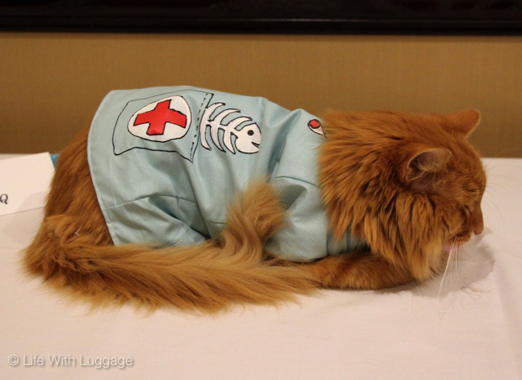algonquin hotel cat fashion show doctor costume