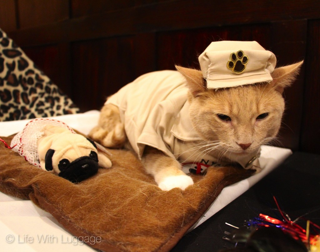 algonquin hotel cat fashion show dog catcher outfit