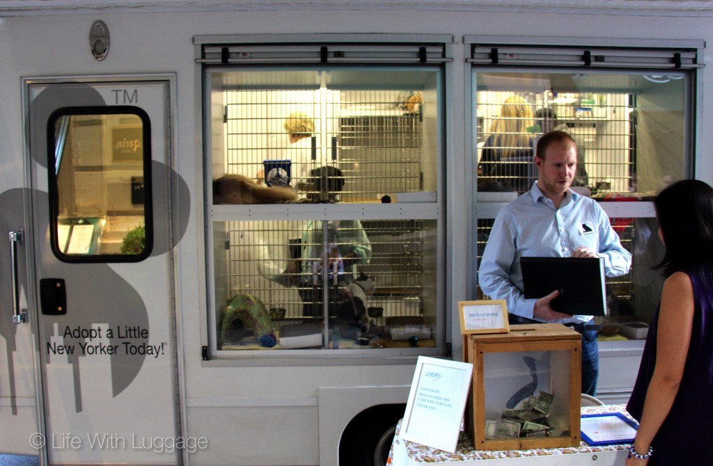 animal adoption van